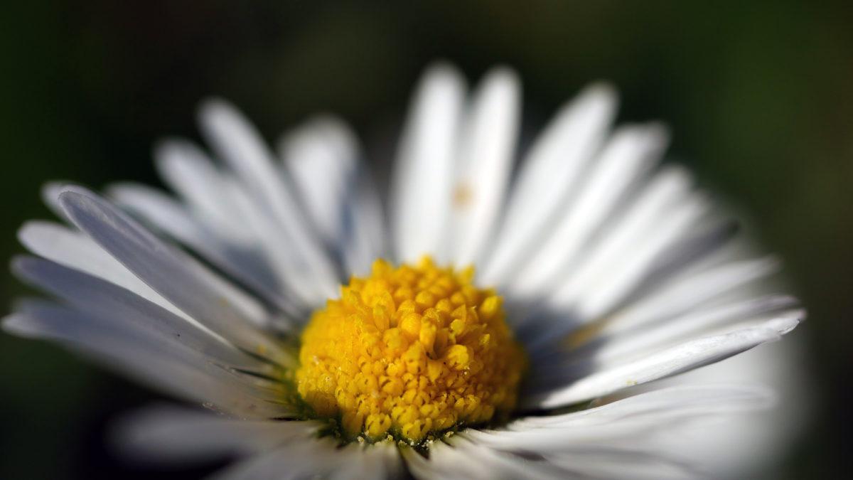 la confiance est la fondation de toute floraison
