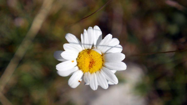 Nouvelle – Le monde est une fleur au bord de l'éclosion